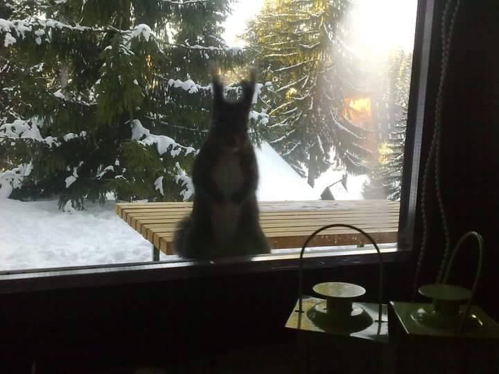 vjeverica na prozoru